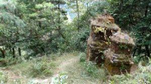 lura chortens in forest